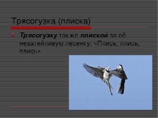 Трясогузка (плиска) Трясогузку также плиской за её незатейливую песенку: «Пли