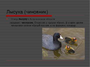 Лысуха (чиновник) Птицу лысуху в Астраханской области называют чиновник. Опер