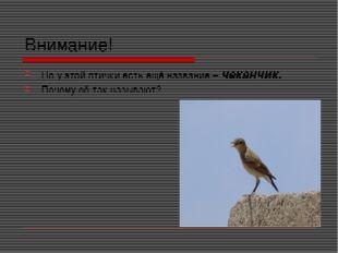 Внимание! Но у этой птички есть ещё название – чеканчик. Почему её так называ