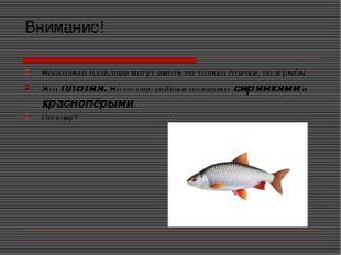 Внимание! Несколько названий могут иметь не только птички, но и рыбы. Это пло