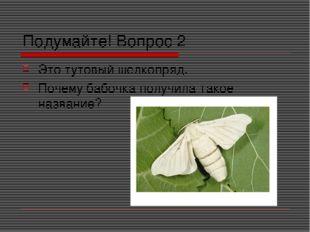 Подумайте! Вопрос 2 Это тутовый шелкопряд. Почему бабочка получила такое назв