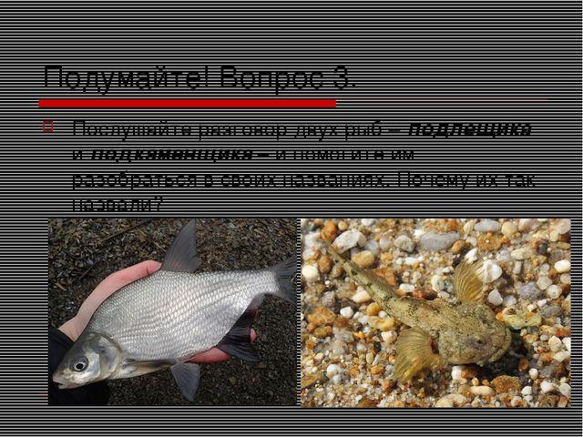 Подумайте! Вопрос 3. Послушайте разговор двух рыб – подлещика и подкаменщика...