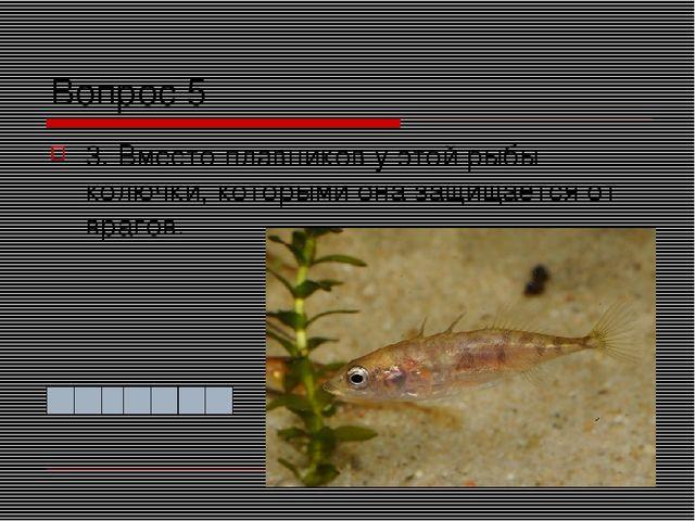 Вопрос 5 3. Вместо плавников у этой рыбы колючки, которыми она защищается от...