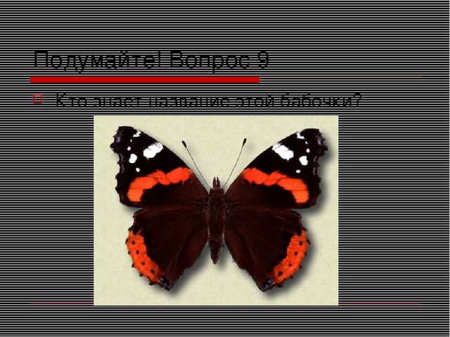 Подумайте! Вопрос 9 Кто знает название этой бабочки?