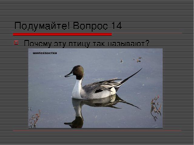 Подумайте! Вопрос 14 Почему эту птицу так называют?