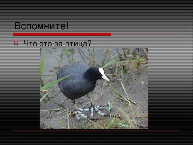 Вспомните! Что это за птица?