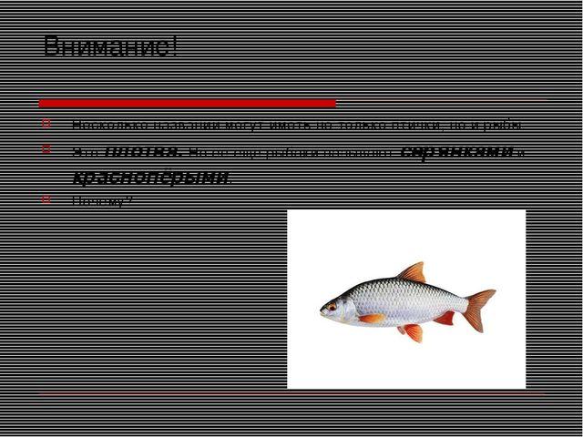 Внимание! Несколько названий могут иметь не только птички, но и рыбы. Это пло...
