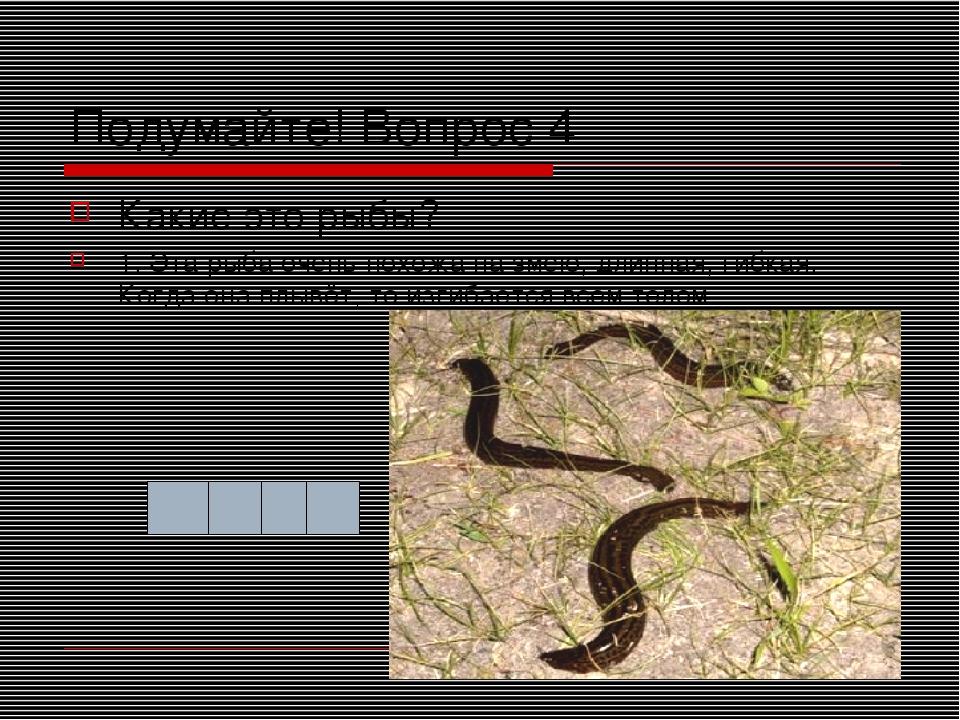 Подумайте! Вопрос 4 Какие это рыбы? 1. Эта рыба очень похожа на змею, длинная...