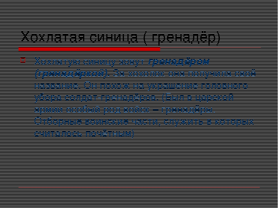 Хохлатая синица ( гренадёр) Хохлатую синицу зовут гренадёром (гренадёркой). З...