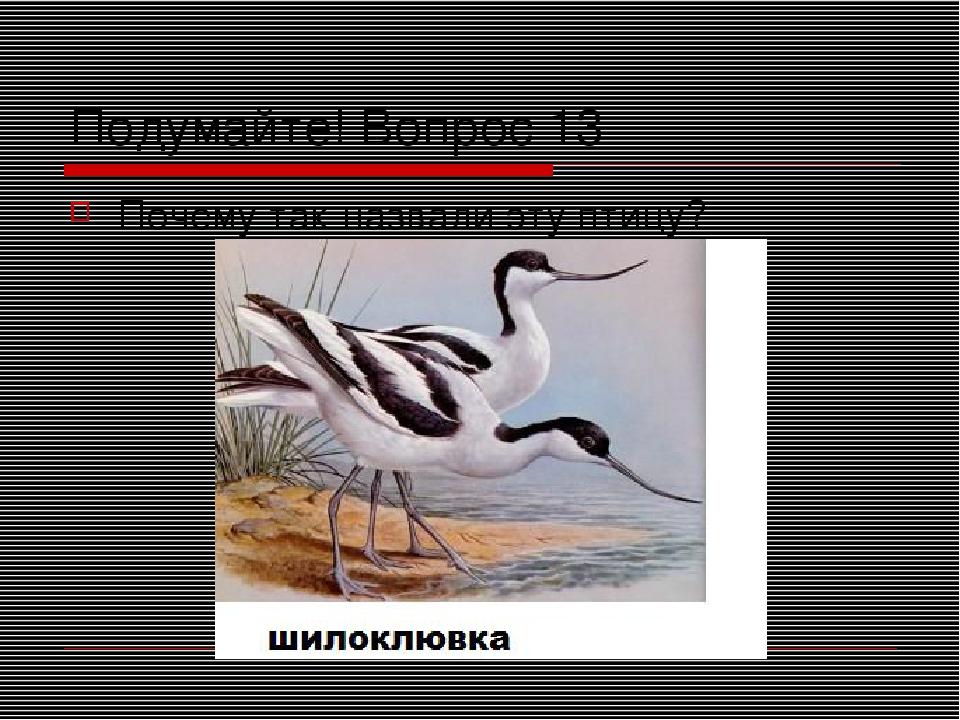Подумайте! Вопрос 13 Почему так назвали эту птицу?