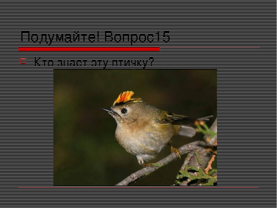 Подумайте! Вопрос15 Кто знает эту птичку?