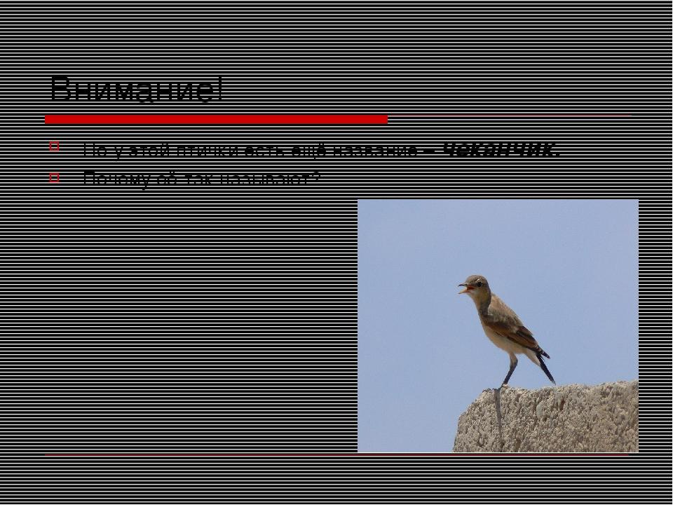 Внимание! Но у этой птички есть ещё название – чеканчик. Почему её так называ...