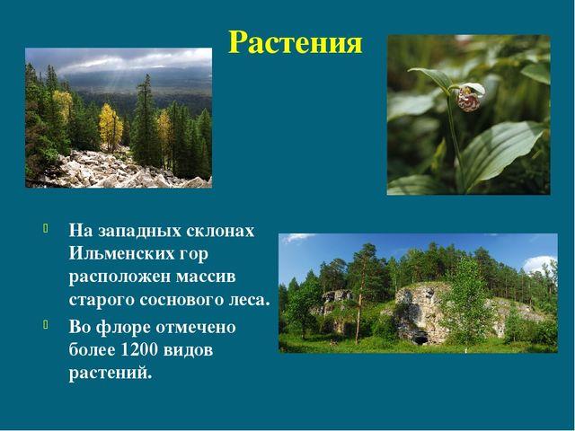 Растения На западных склонах Ильменских гор расположен массив старого соснов...
