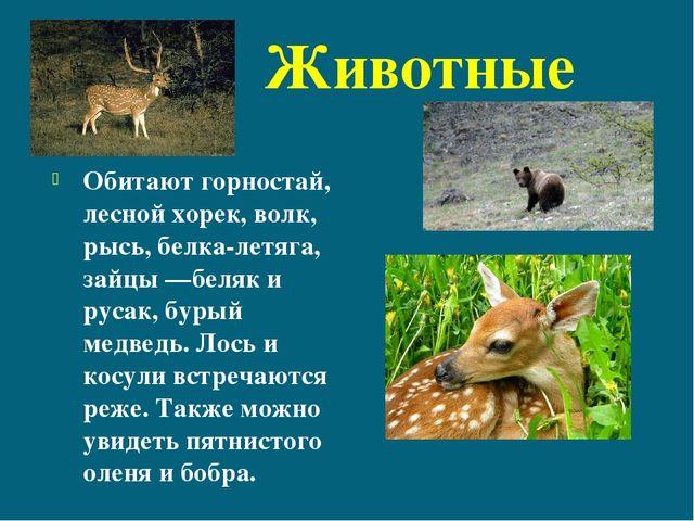 Животные Обитают горностай, лесной хорек, волк, рысь, белка-летяга, зайцы—б...