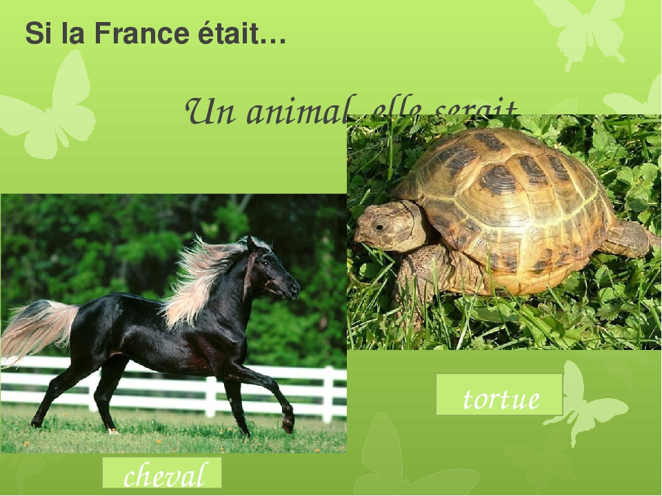Si la France était… Un animal, elle serait cheval tortue