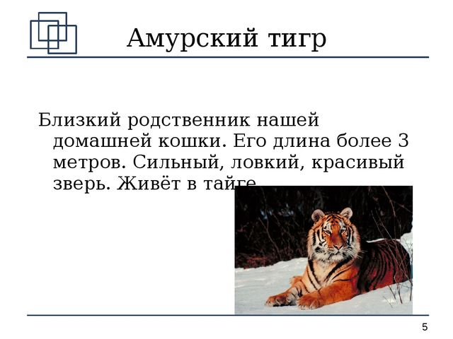 Амурский тигр Близкий родственник нашей домашней кошки. Его длина более 3 мет...