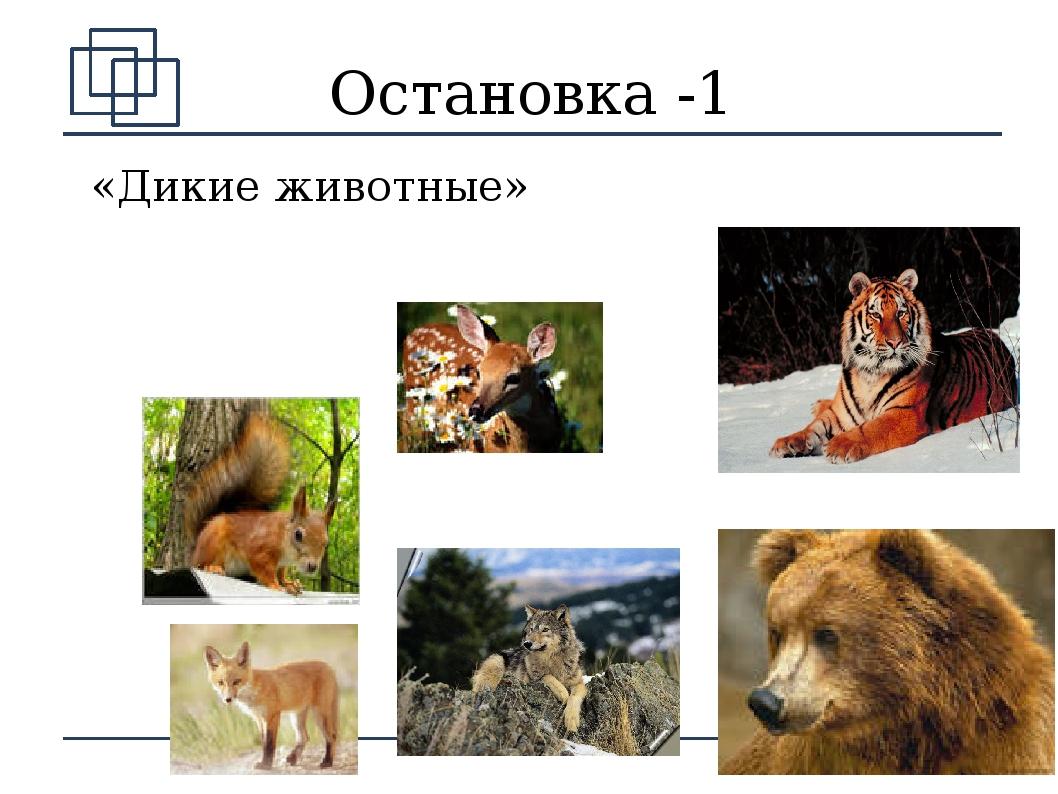 Доклад о животном арктики 4 класс storify