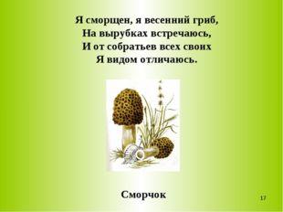 Я сморщен, я весенний гриб, На вырубках встречаюсь, И от собратьев всех своих