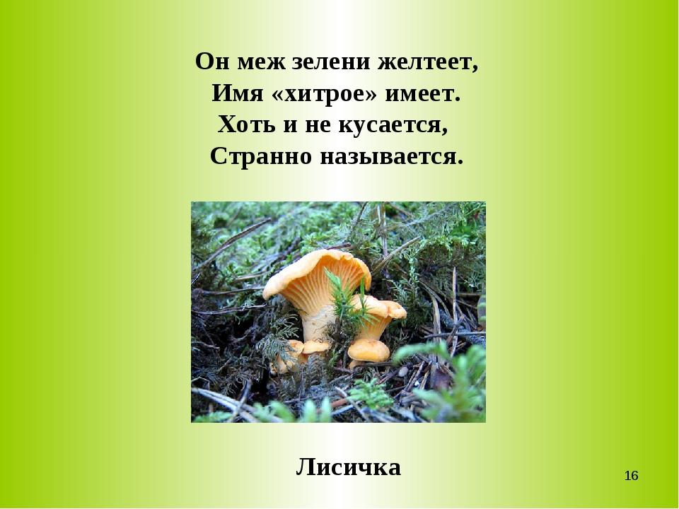 Он меж зелени желтеет, Имя «хитрое» имеет. Хоть и не кусается, Странно называ...