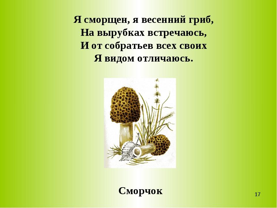 Я сморщен, я весенний гриб, На вырубках встречаюсь, И от собратьев всех своих...