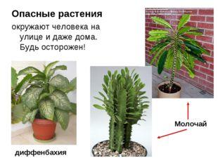 Опасные растения окружают человека на улице и даже дома. Будь осторожен! Моло