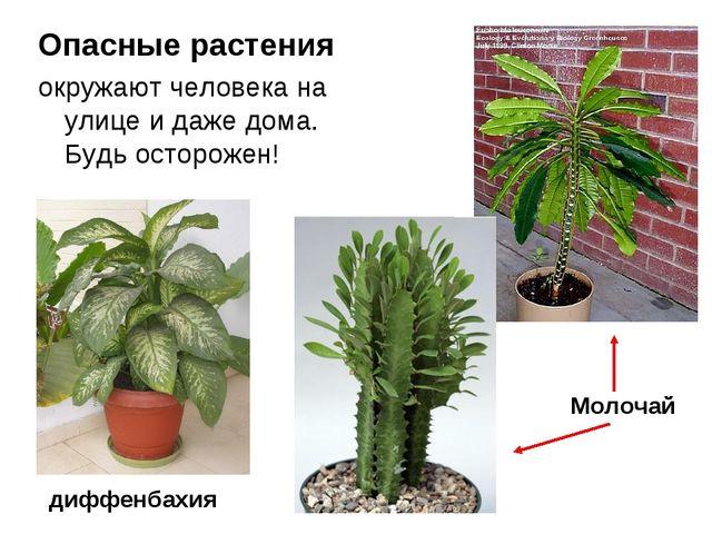 Опасные растения окружают человека на улице и даже дома. Будь осторожен! Моло...
