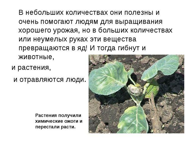 В небольших количествах они полезны и очень помогают людям для выращивания х...