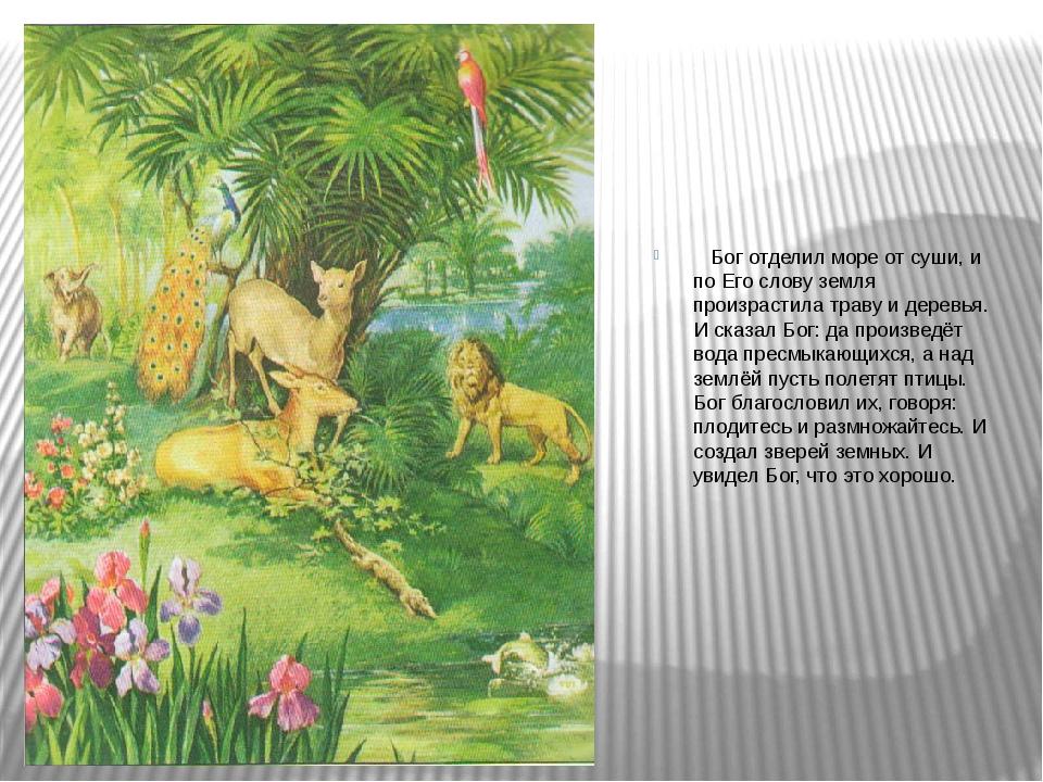 Бог отделил море от суши, и по Его слову земля произрастила траву и деревья....