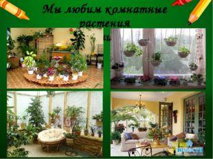 Мы любим комнатные растения и украшаем ими своё жилище