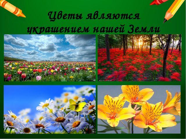 Цветы являются украшением нашей Земли