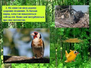 2. Не лови і не неси додому здорових пташенят. Їх батьки поряд, хоча і не по
