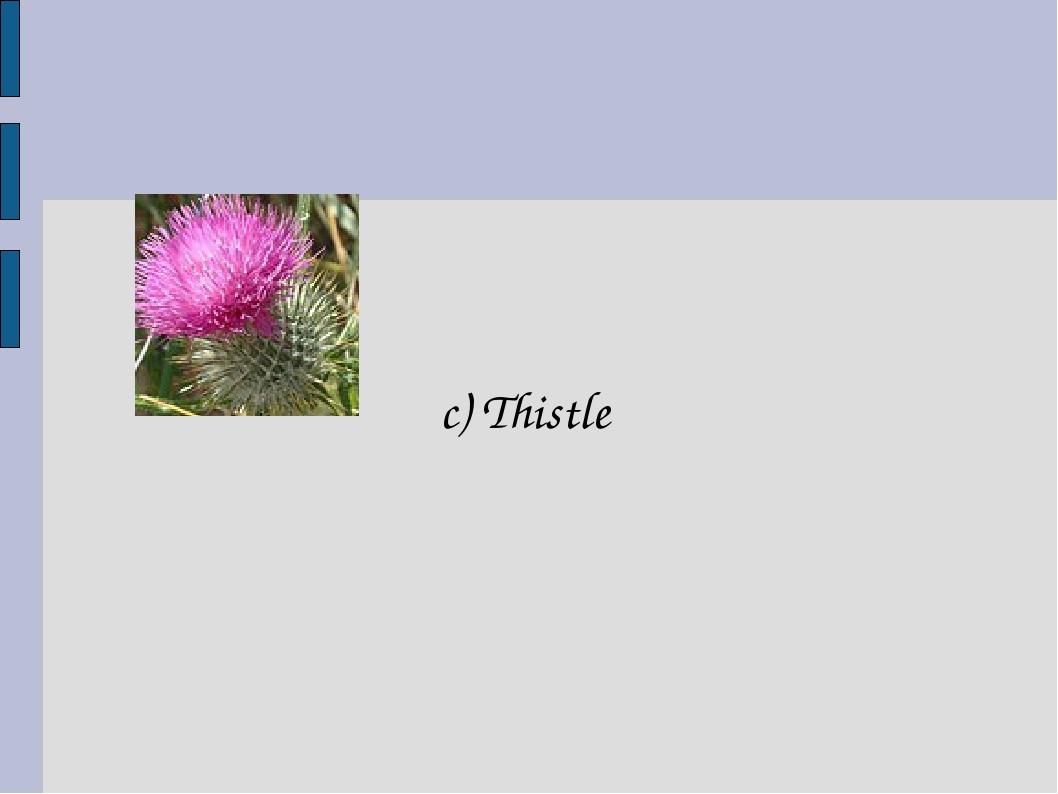 c) Thistle