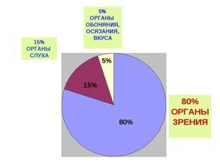15% ОРГАНЫ СЛУХА 5% ОРГАНЫ ОБОНЯНИЯ, ОСЯЗАНИЯ, ВКУСА 80% ОРГАНЫ ЗРЕНИЯ