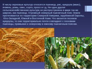 К масличным культурам относят такие полевые культуры, как соя, подсолнечник,