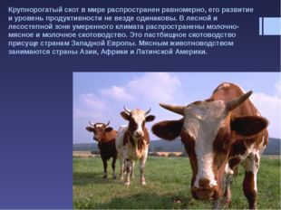 Овцеводство хорошо развито в Великобритании, Испании, Турции, Китае и в стран