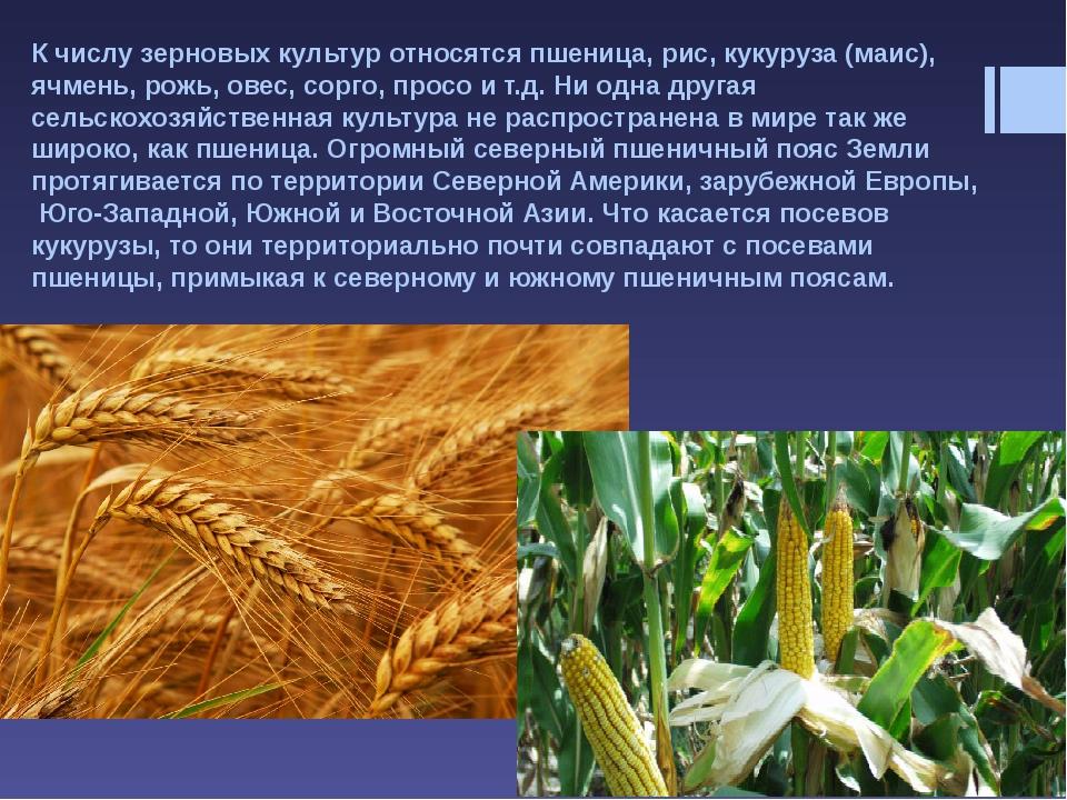 К масличным культурам относят такие полевые культуры, как соя, подсолнечник,...