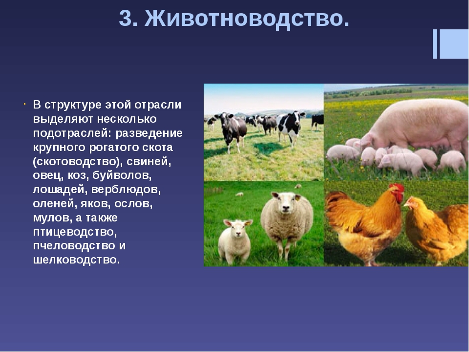 Свиноводство получило распространение в странах Азии, около половины выращива...