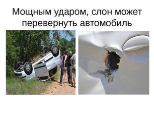 Мощным ударом, слон может перевернуть автомобиль