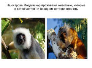 На острове Мадагаскар проживают животные, которые не встречаются ни на одном