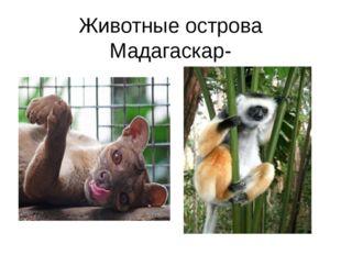 Животные острова Мадагаскар-