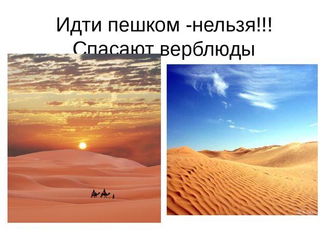 Идти пешком -нельзя!!! Спасают верблюды