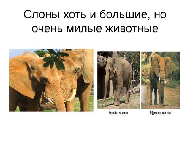 Слоны хоть и большие, но очень милые животные