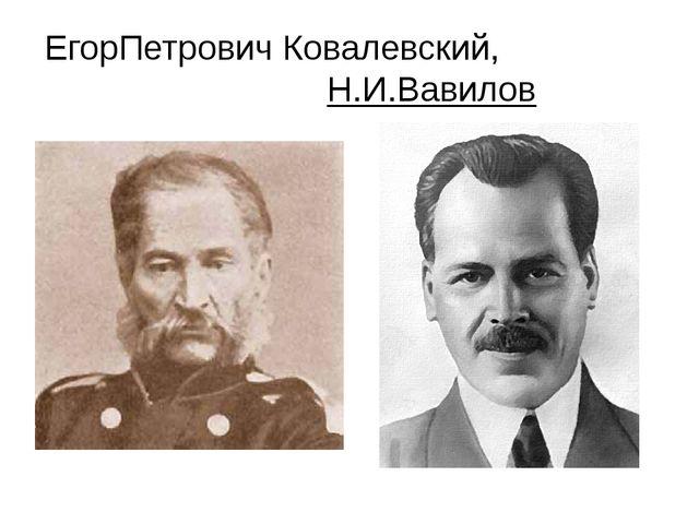 ЕгорПетрович Ковалевский, Н.И.Вавилов