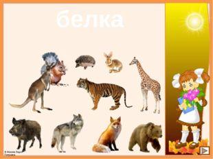 белка © Фокина Лидия Петровна