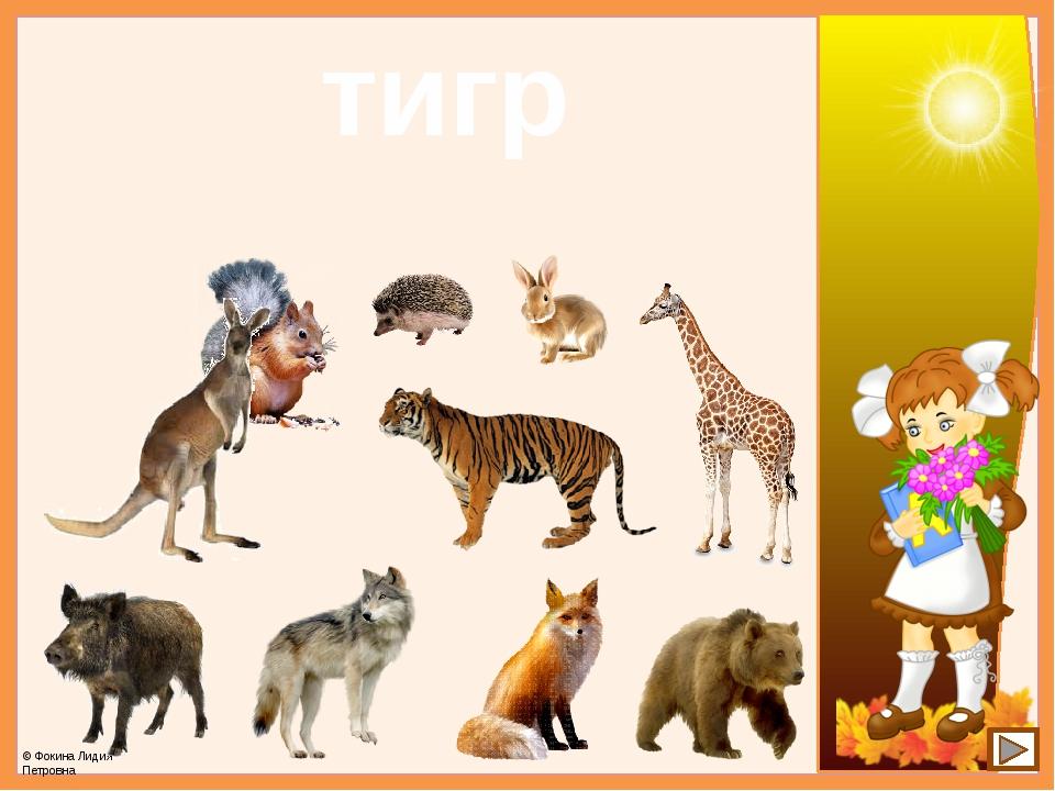 тигр © Фокина Лидия Петровна