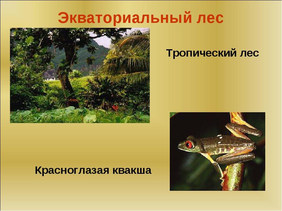 Экваториальный лес Тропический лес Красноглазая квакша