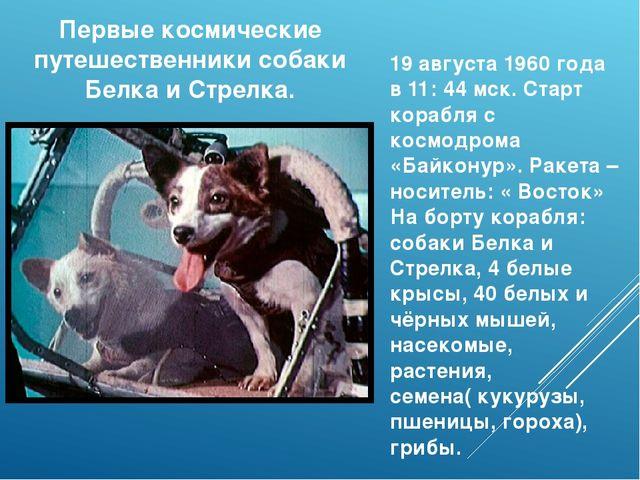 Первые космические путешественники собаки Белка и Стрелка. 19 августа 1960 го...