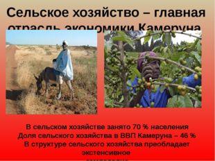 Сельское хозяйство – главная отрасль экономики Камеруна В сельском хозяйстве