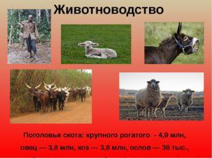 Животноводство Поголовьескота:крупногорогатого - 4,9 млн, овец—3,8млн