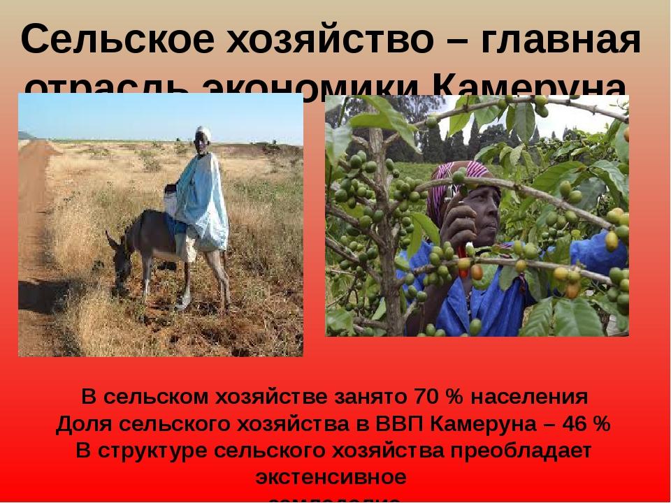 Сельское хозяйство – главная отрасль экономики Камеруна В сельском хозяйстве...